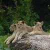Cincinnati Zoo - 26 June '15 :