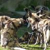 Cincinnati Zoo - 30 July '15 :