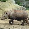 Cincinnati Zoo - 7 Sept. '15 :